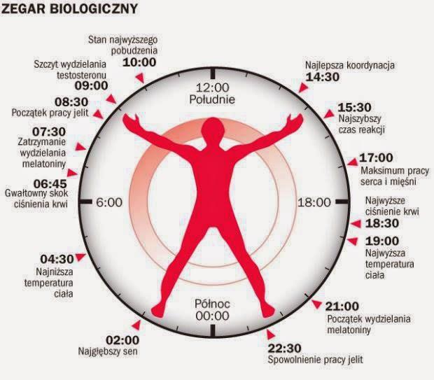 Zegar biologiczny człowieka