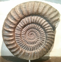 Ammonites del Museo de Lyme Regis