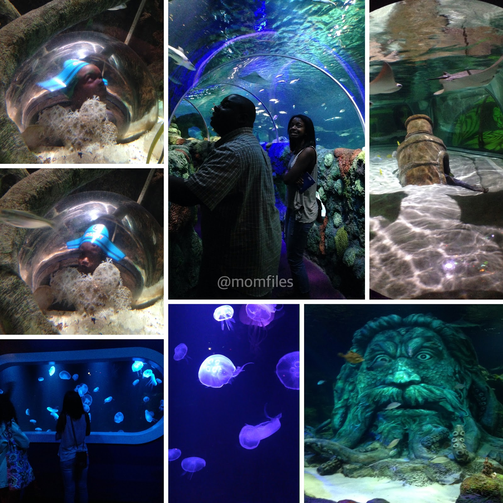 Our Visit To Sea Life Aquarium Charlotte Concord Hosted