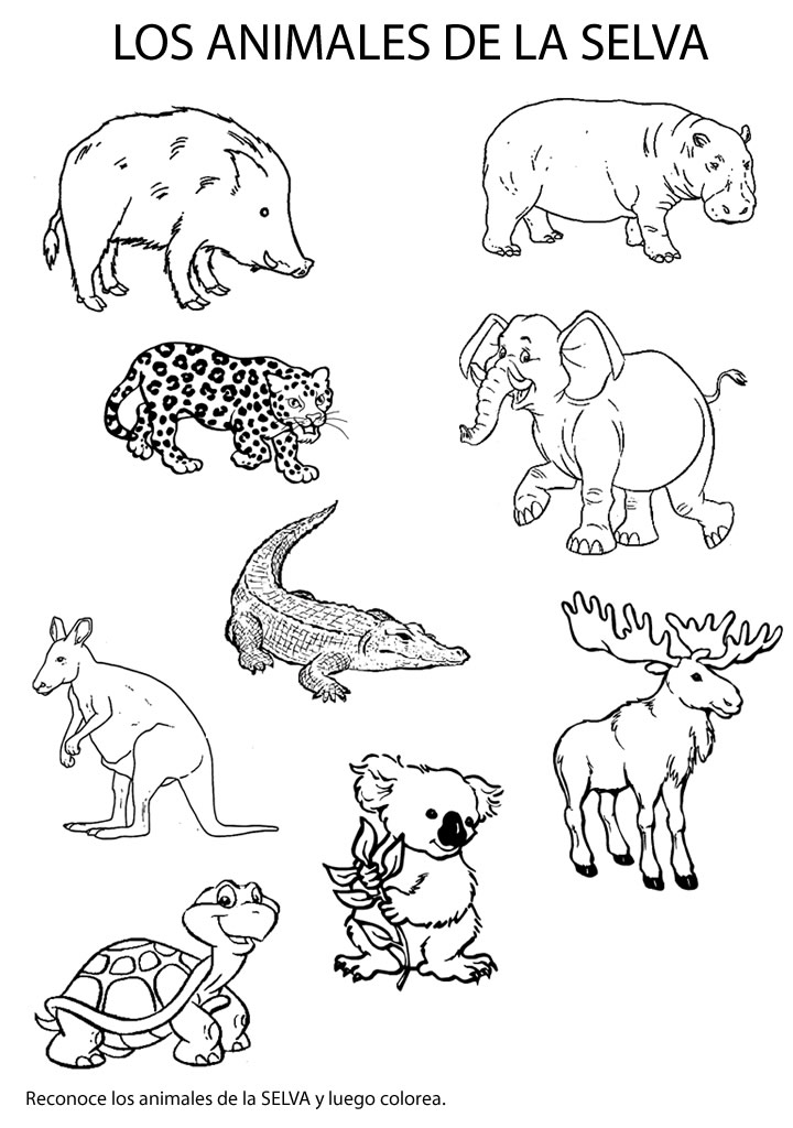 CuentosDeDonCoco.Com: ANIMALES DE LA SELVA PARA COLOREAR PARA NIÑOS