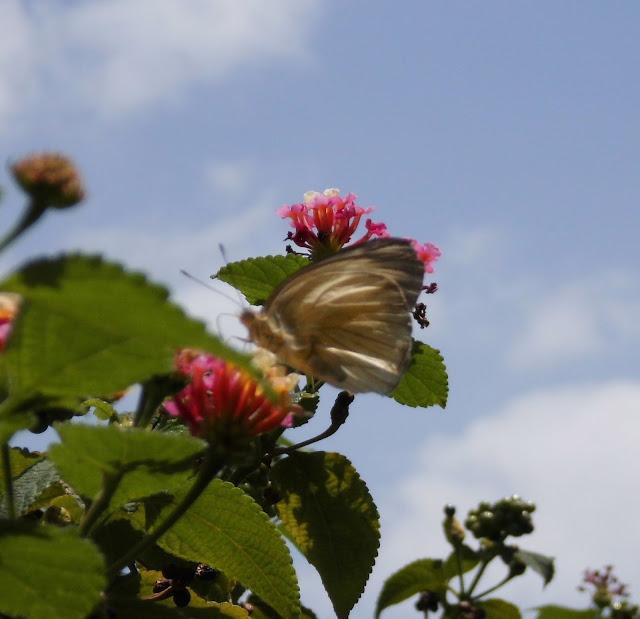 flores y mariposa