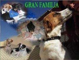 La web de Gran Familia.
