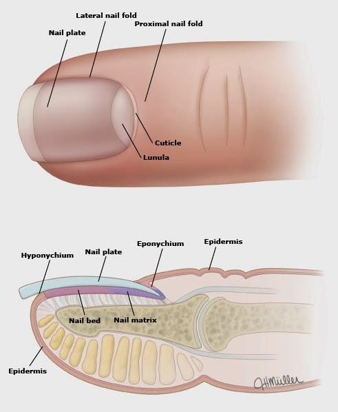 Los polvos del hongo de los pies