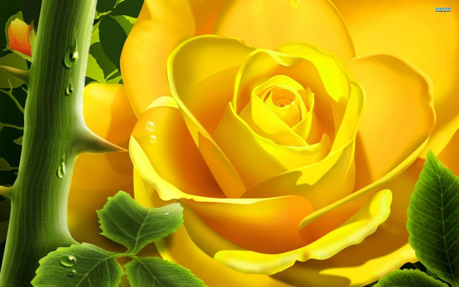 Rose flowers wallpapers real hd wallpapers - Flower wallpaper 3d pic ...
