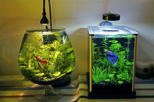 aquarium dengan desain simple unik dan minimalis