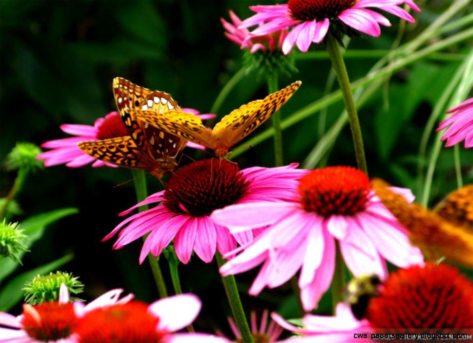 Orange Flowers and Butterflies