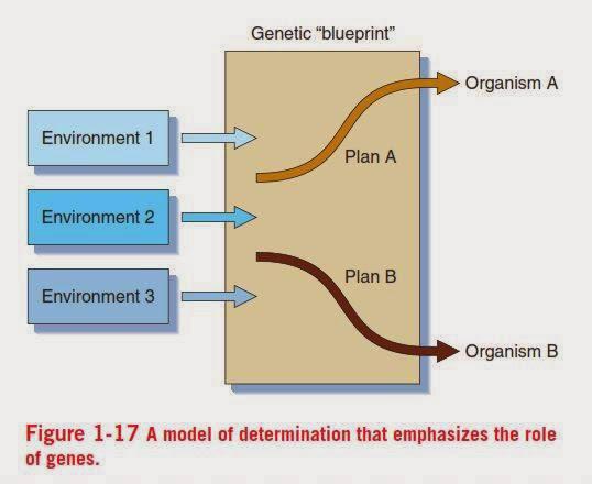Hidup yang ceria interaksi gen dan lingkungannya pada model ini dimana pengaruh gen lebih dominan dari pada pengaruh lingkungannya yang dimana dalam keadaan lingkungan yang bagaimanapun genotip dari suatu malvernweather Image collections