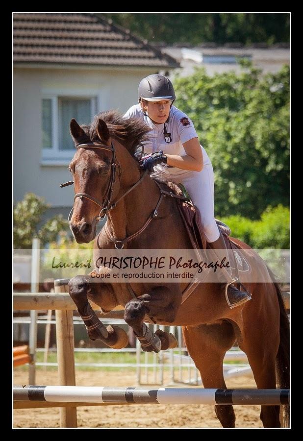 photographie concours equestres Loire atlantique
