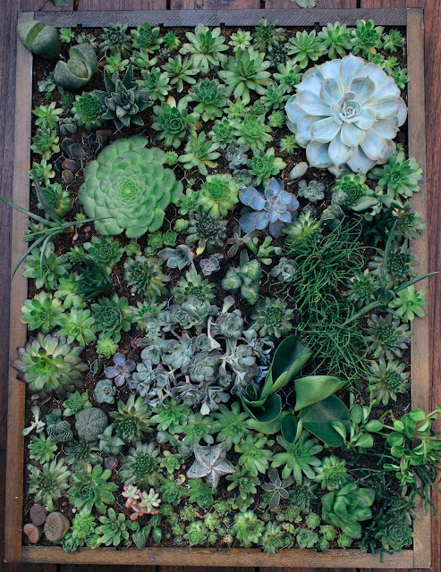 DIY vertical succulent planter