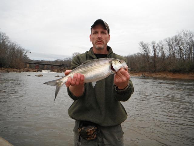 North carolina river fishing and canoeing with mack shad for North river fish bar