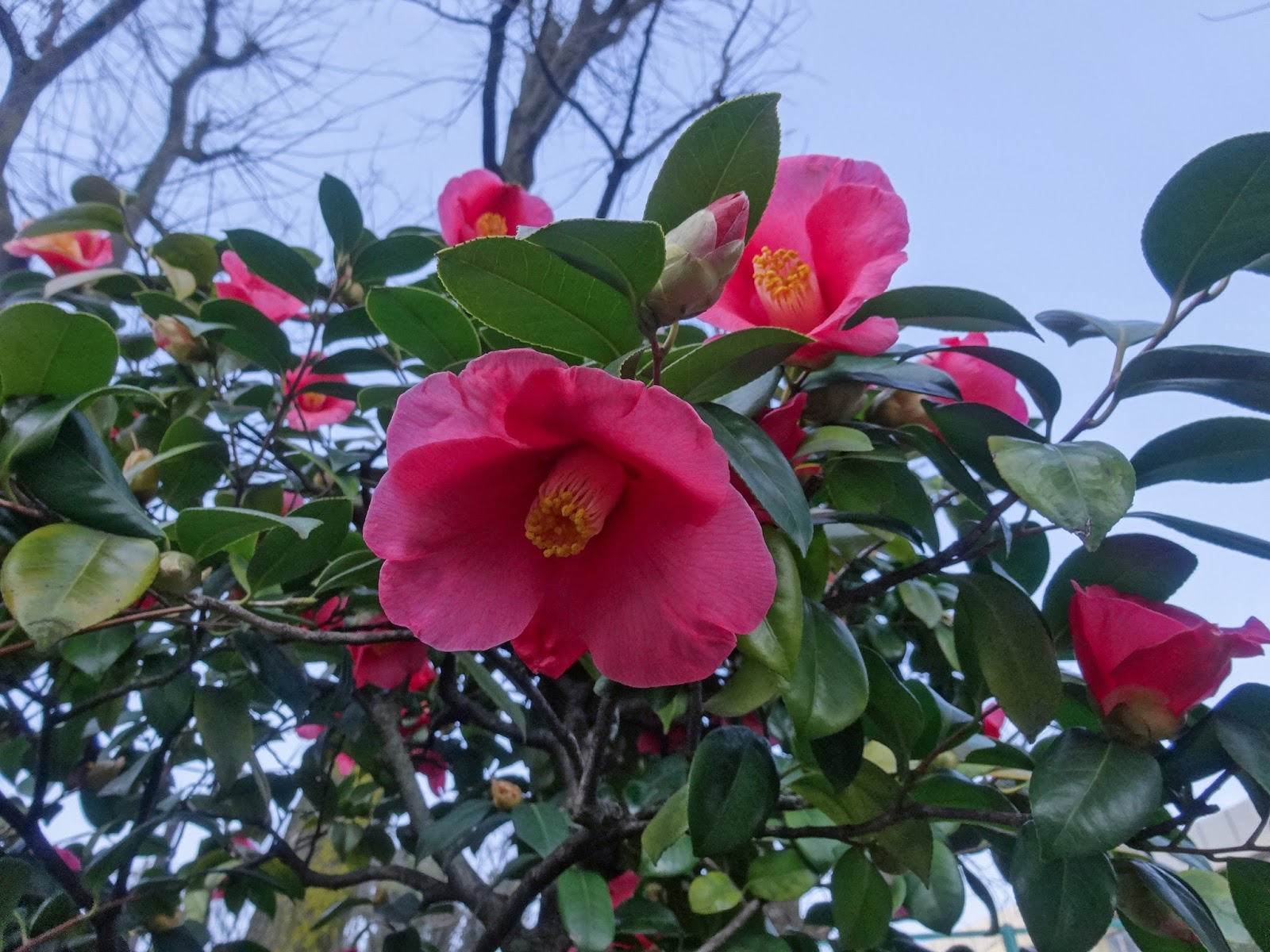 花,西戸山公園野球場〈著作権フリー画像〉Free Stock Photos
