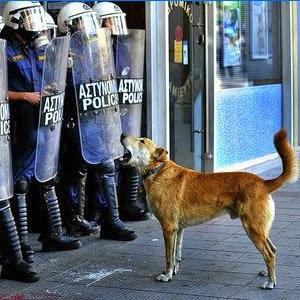 لوکانیکوس٬ سگ معترض یونانی که همواره در صف اول اعتراضات مردمی یونان بود، بر اثر سکته قلبی جان باخت