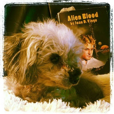 A fuzzy grey poodle, Murchie, lies on a fuzzy pillow. Behind him sits a book club-sized hardcover with a pale-skinned young man on its cover. Murchie and the man have their heads twisted to the side in the same fashion.