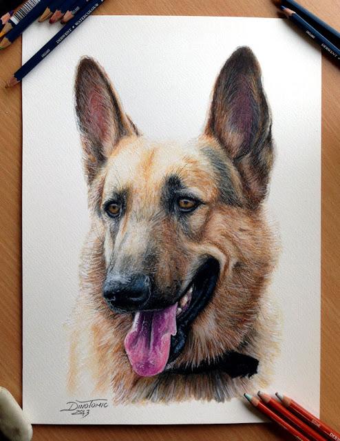 30 гиперреалистичных портрета собак карандашом
