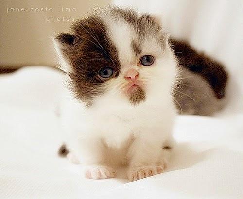 Des Belles images chats