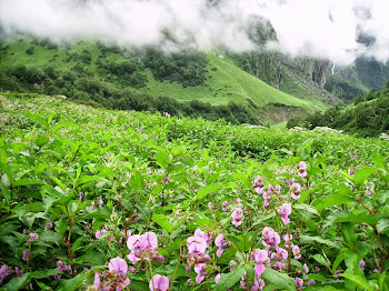 Good-bye Valley of Flowers