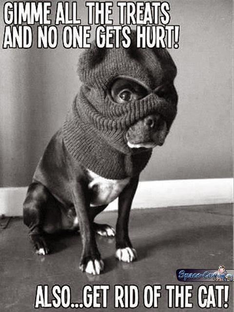 funny cute dog demands