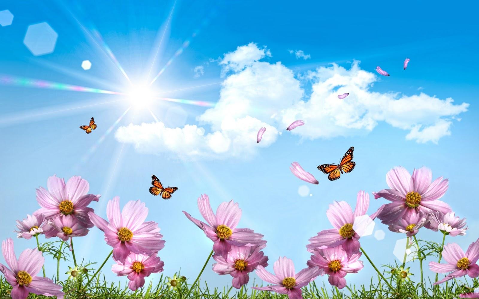 jardin de mariposas: