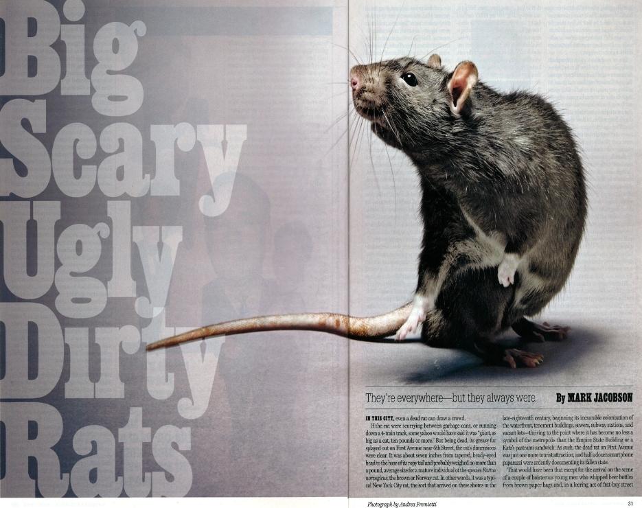 Magic Exterminating: New York Magazine Talks about Rats & Rat ...