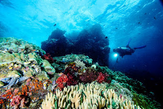 Alam Bawah Laut Pulau Misool
