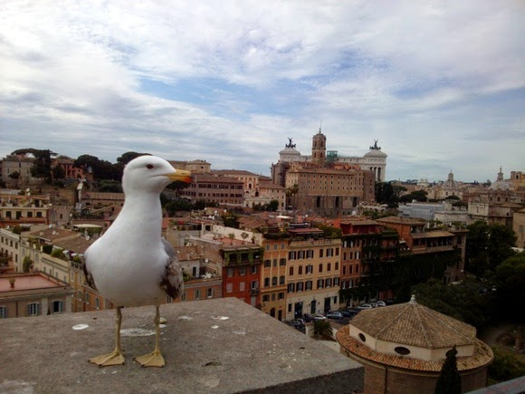 Birds of Rome
