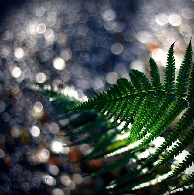 Copyright Annie Japaud 2013