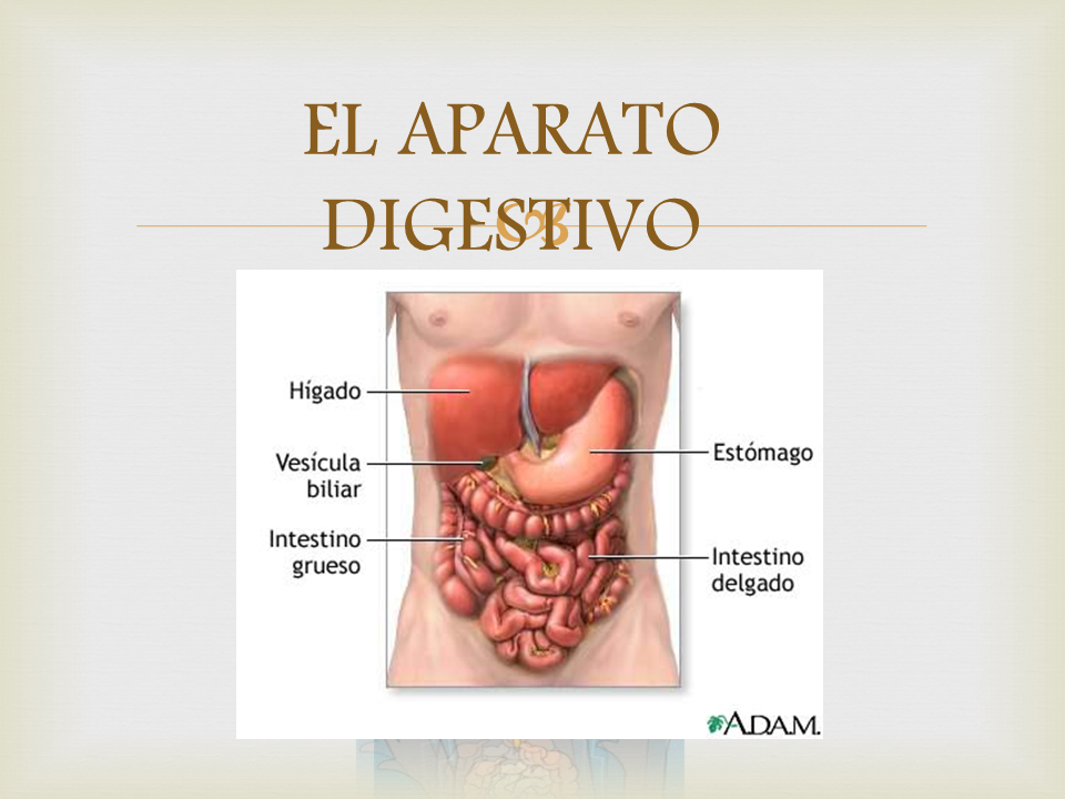 Asistencia integral al adulto mayor: Anatomía y fisiología del ...