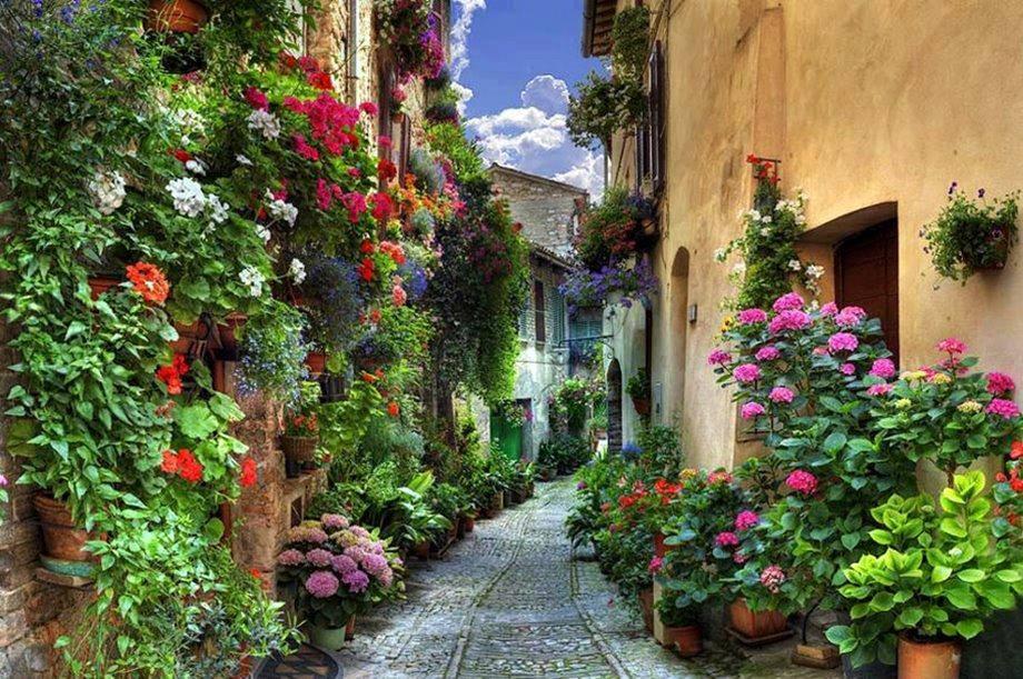 flores jardim sardinheiras
