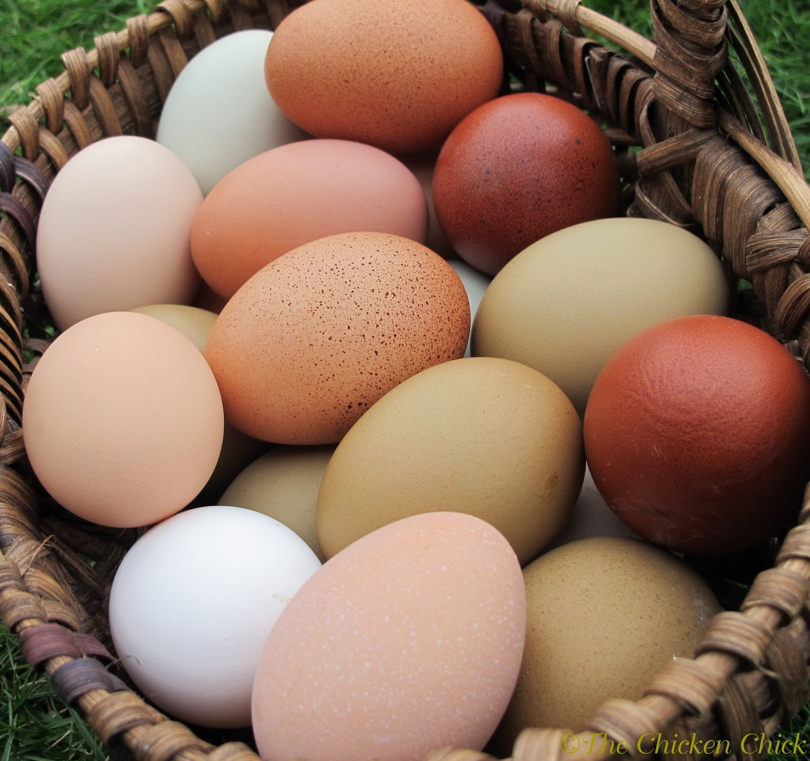 the chicken chick 8 tips for clean eggs from backyard