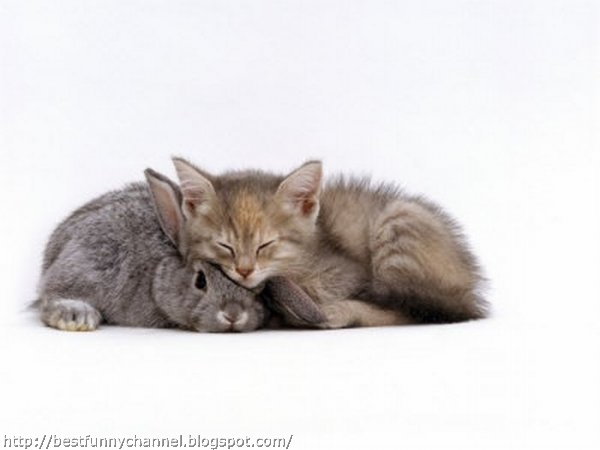 Grey bunny and kitten.