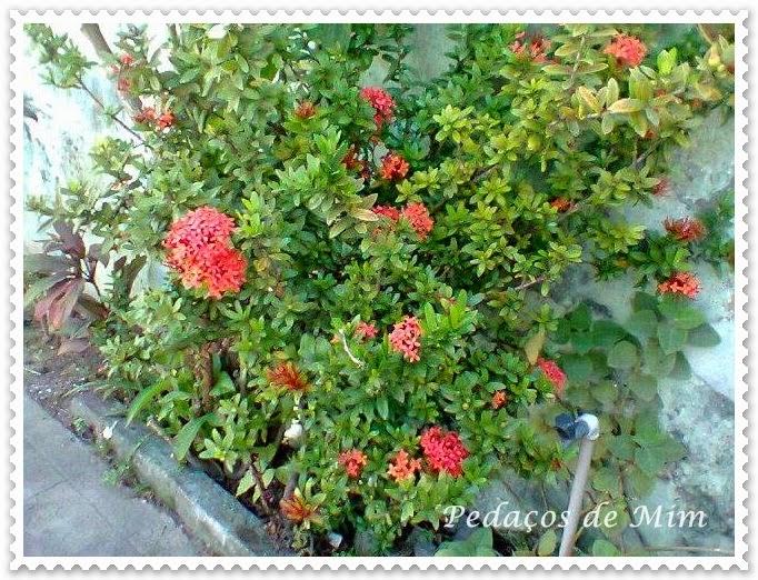 Flores que minha mãe cultiva