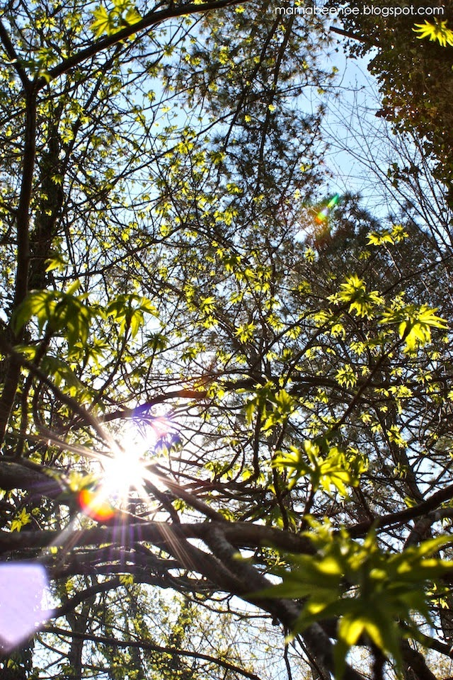 Sunshine through the trees