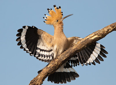 Pájaros de colores en el paraíso (8 fotos)