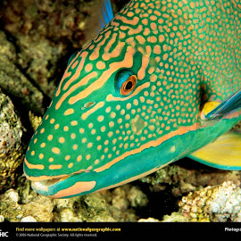 Ikan Tercantik @ Digaleri.com