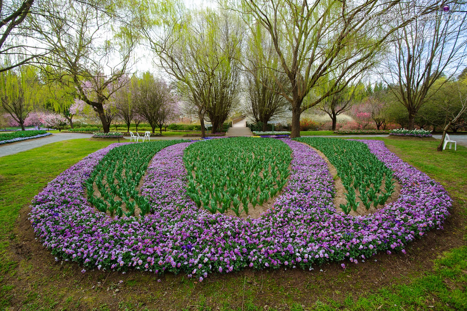 Philip Avellana, adventscape, iori, Tulip Top Gardens, garden, spring, NSW, New South Wales, Sutton, Old Federal Highway, Bywong, 2621, pathways