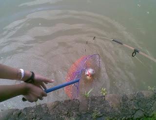 tips jitu teknik memancing,umpan mancing sungai air keruh,ramuan umpan mancing belanak,ikan patin,di sungai,di sungai malam hari,sungai air tawar,usungai kapuas,rahasia umpan mancing,