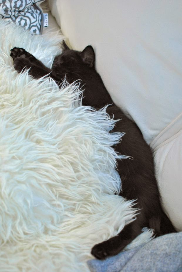 svart kattunge fårfäll