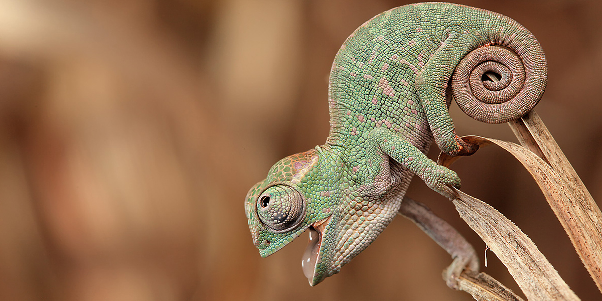 Animals Chameleons l 300+ Muhteşem HD Twitter Kapak Fotoğrafları