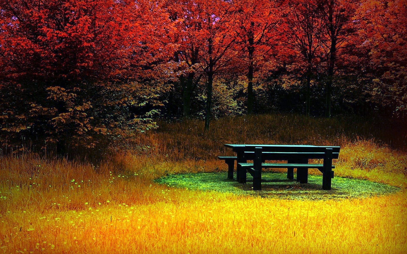 Bench in an autumn forest 1920x1080