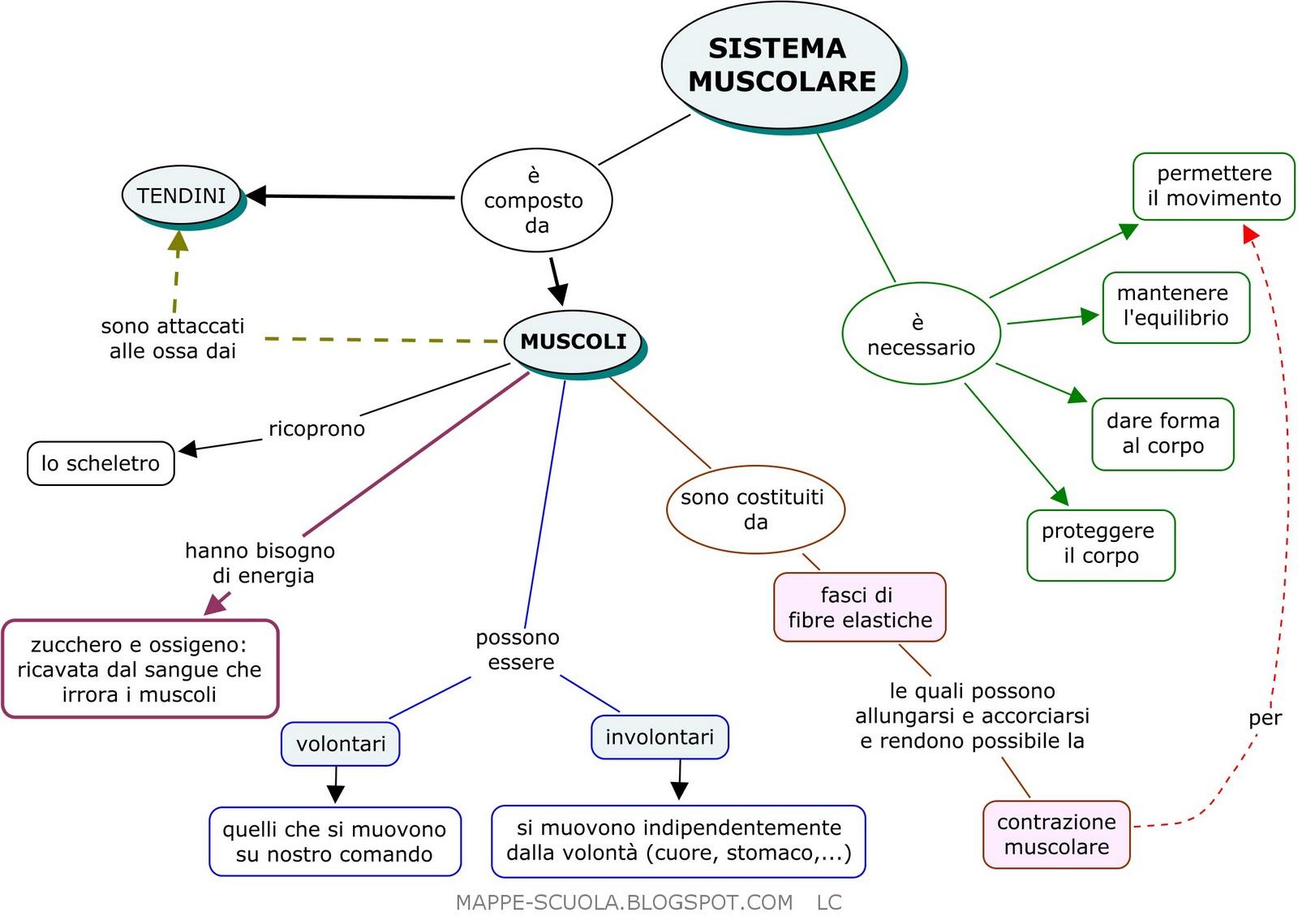 Matematica e : Sistema muscolare
