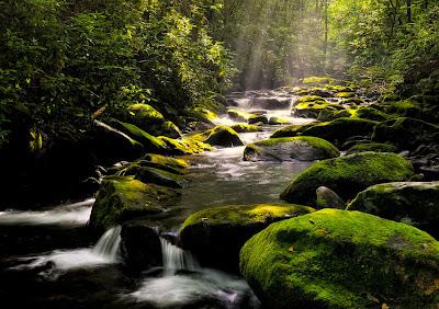Río cruzando el bosque de las rocas verdes