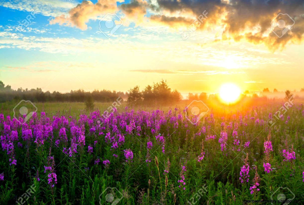 Beautiful Rural Landscape With The Sunrise A Blossoming Meadow