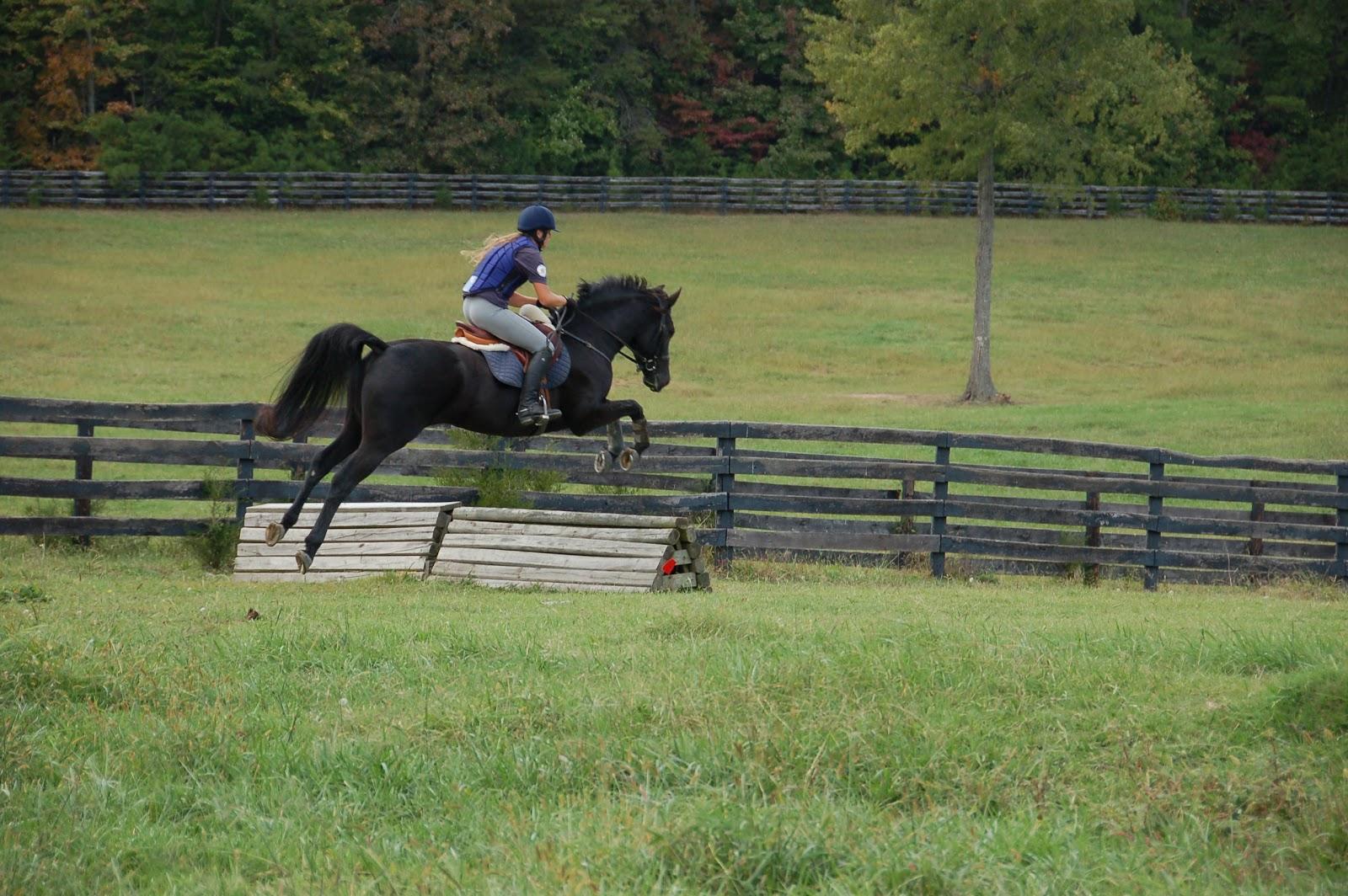Girl on Beautiful Black Horse Jumping High PictureBlack Horse Jumping