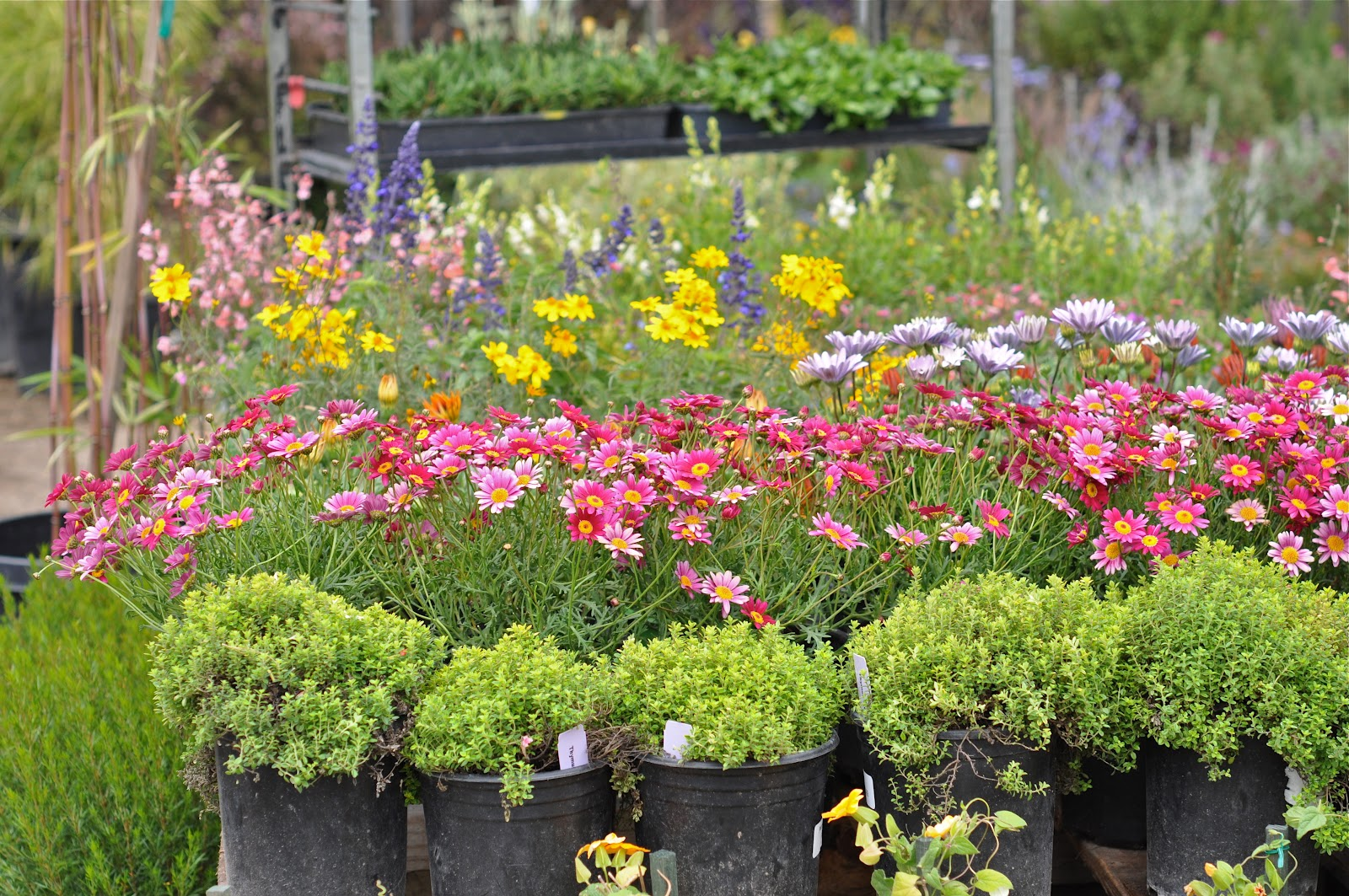 But i what really gets me in a bad way is the plant nursery