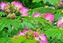 Gerak Tumbuhan: Endonom, Higroskopis dan Esionom