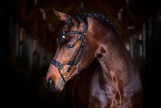 http://www.psofsweden.com/en/for-the-horse/bridle/high-jump-revolution.html