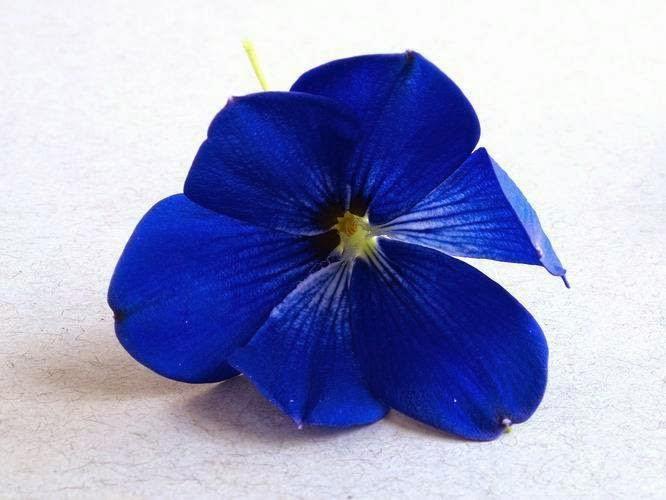 Μπλε ... Συμβολισμός