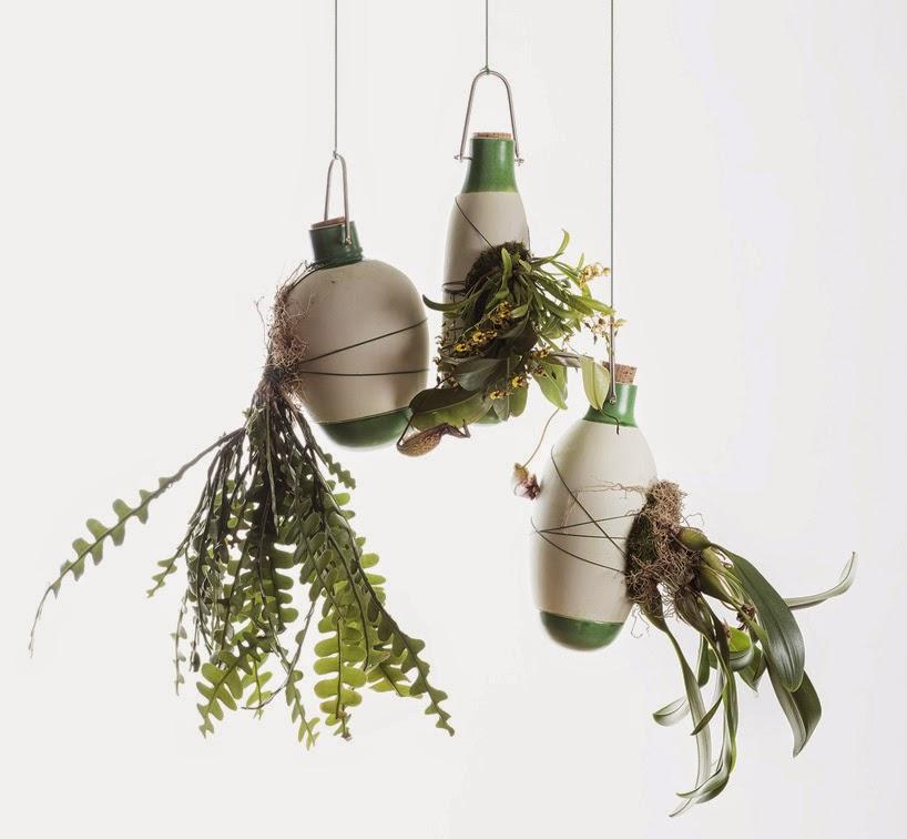 nombre cientfico de lo que muchos conocemos como plantas areas esta especie de vegetacin se encuentra sobre todo en selvas tropicales y crecen