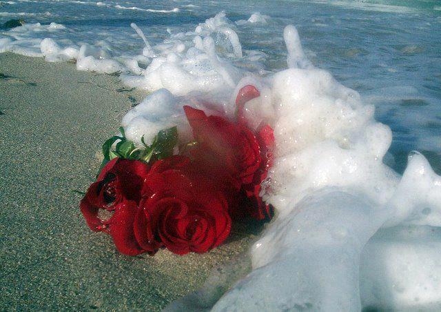 mis poemas son mi sentimiento flor hermosa