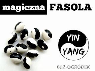 magiczna fasola yin yang bean